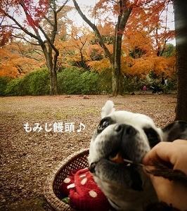 最後の公園散歩はにこちゃんの贈り物♪