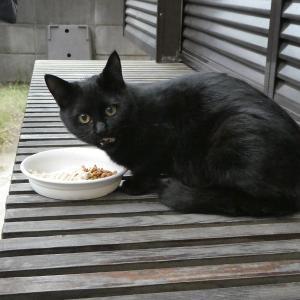 黒猫ちゃんの微妙な七変化(笑)