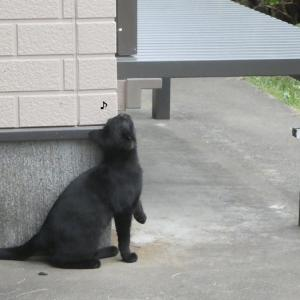 全然懐かない猫さんたち、、、、、