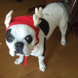 やっぱりクリスマスはサンタさん♪