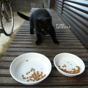 朝と夕方で微妙に違う仔猫ちゃんのお食事風景
