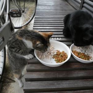 黒猫ちゃんの食べ物の恨み!?