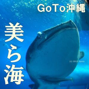 【GoTo沖縄】美ら海水族館でジンベイザメに大喜び!イルカとウミガメに餌やり体験も♡