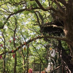 【子連れ熱海】「森の空中基地くすくす」で『ツリーハウスエッグハント』に挑戦!