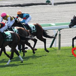 函館スプリントステークス2018/出走登録馬と血統