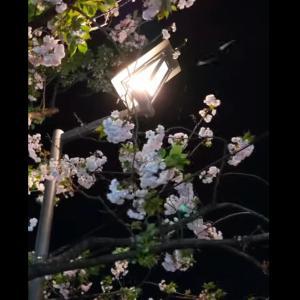 ■春の嵐、葉桜の舞