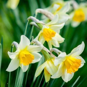 ■春の訪れを知るとき