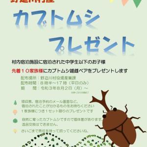 カブトムシの雄雌プレゼント❣️しますよ‼️奈良県吉野郡 のせがわ村