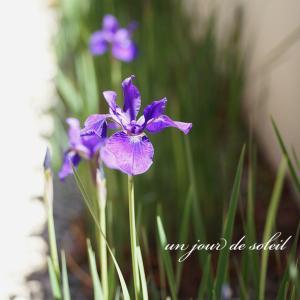 純和風の実家に似合う花