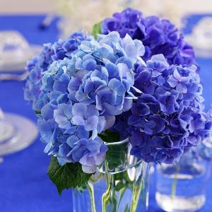 梅雨時期は紫陽花を楽しむ