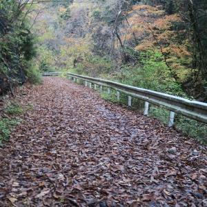 気持ちに余裕のない登山の先に… 奈良・明神平