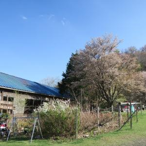 五月の桜 奈良・和佐又山