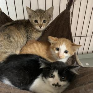 【引取協力C2020-43~48】子猫6頭 生後2ヶ月 ~地域猫現場から
