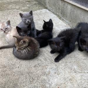【引取協力C2021-11~20】子猫10頭 生後1ヶ月半
