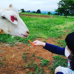 新川牧場にて、ヤギさんにくびったけ(*´ω`*)