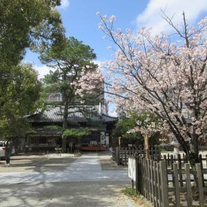 第731回 白峯神宮 左近の桜~上京桜散策~その1