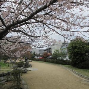 第733回 満開の桜井公園~上京桜散策~その3