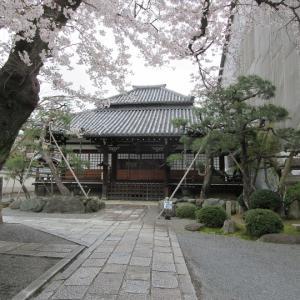 第734回 桜満開の本隆寺~上京桜散策~その4