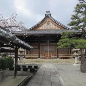 第737回 満開の妙蓮寺の桜~上京桜散策~その7