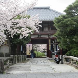 第739回 小川通の本法寺~上京桜散策~その9
