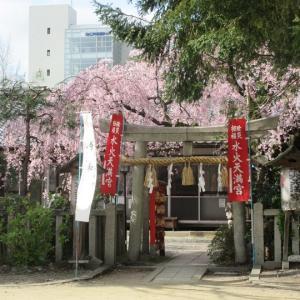 第740回 水火天満宮の枝垂桜~上京桜散策~その10