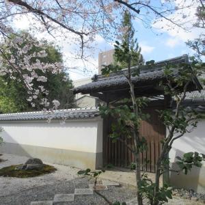 第742回 満開の鳴虎報恩寺~上京桜散策~その12