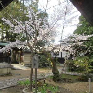 第745回 上御霊神社の桜~上京桜散策~その15
