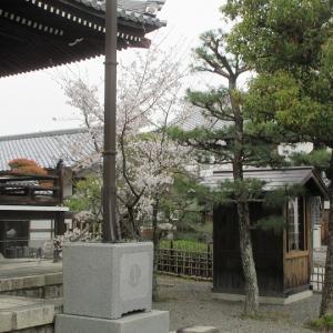 第772回 上善寺の桜~鴨川桜散策~その1