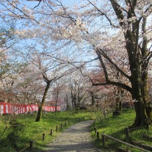 第651回 平野神社に参拝~上七軒桜散策2019~その4