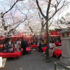 第652回 平野神社で桜散策~上七軒桜散策2019~その5