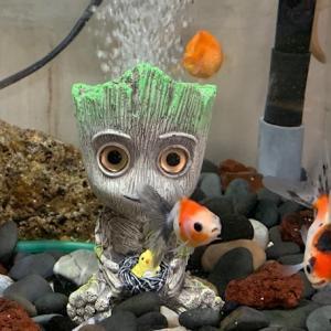 お魚の世界・・・