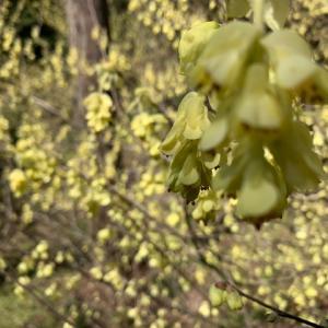 春に喜ぶ植物たち