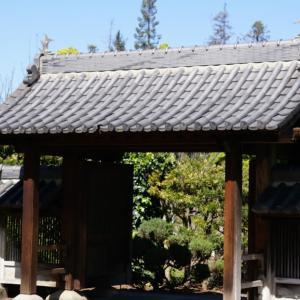サンノゼの日本友好庭園で春のお花見 Japanese Friendship Garden