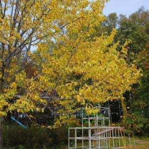 ひじりが丘の秋