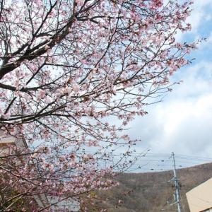 ムラの桜咲く頃