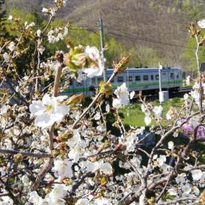 ムラの桜咲く頃 4