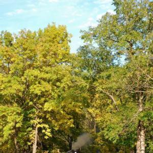 森林鉄道の秋