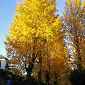 秋の遅いさいたま市。別所沼公園に紅葉散策2019♪*゚(〃^▽^)ノ゙♪*゚★☆彡 その1。
