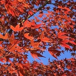 紅葉の公園ジョグ4.5km