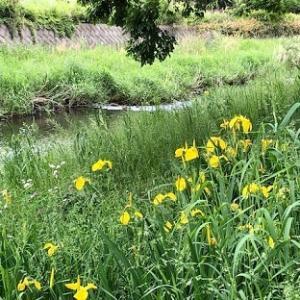 川沿い歩き5.8km・米粒詰草