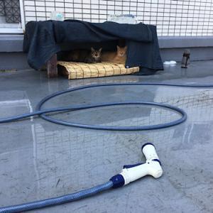 連日の殺人的な暑さに外猫たちは