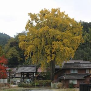 秋の色を堪能♪