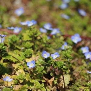 空を見上げて咲く小さな花