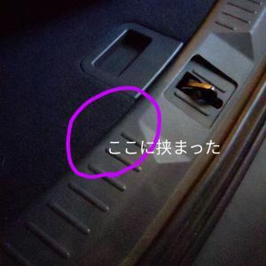 響き渡るワンコの悲鳴【どうしたー!!??】