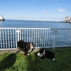 小樽の埠頭公園へ