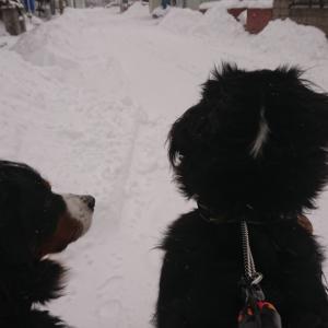 雪がいっぱい積もったよ!