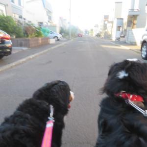 早朝散歩へGO♪