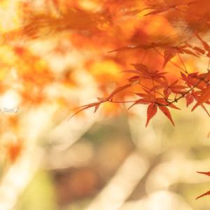 宇甘渓の紅葉(11月24日)その1