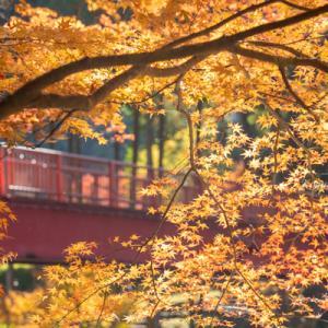 宇甘渓の紅葉(11月24日)その2