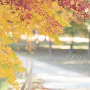 龍泉寺の紅葉(11月24日)その2